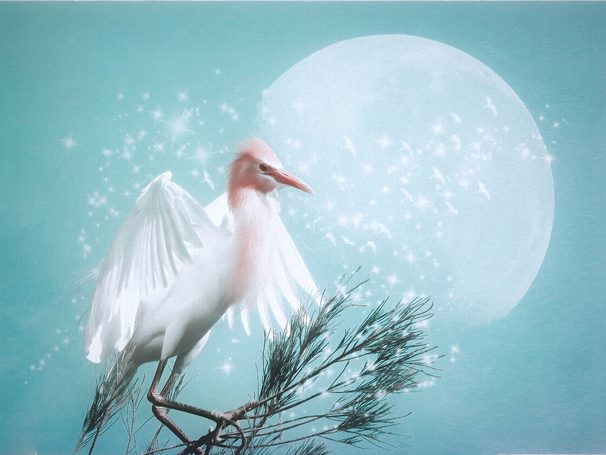 a%20with%20moon%20and%20stars%20egret%20cyan%20TS