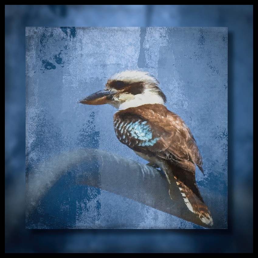 a%20watching%20kookaburra%20jjbebold%20framed