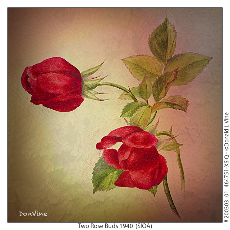 Two%20Rose%20Buds%201940_200303_01_464751-XSIQ