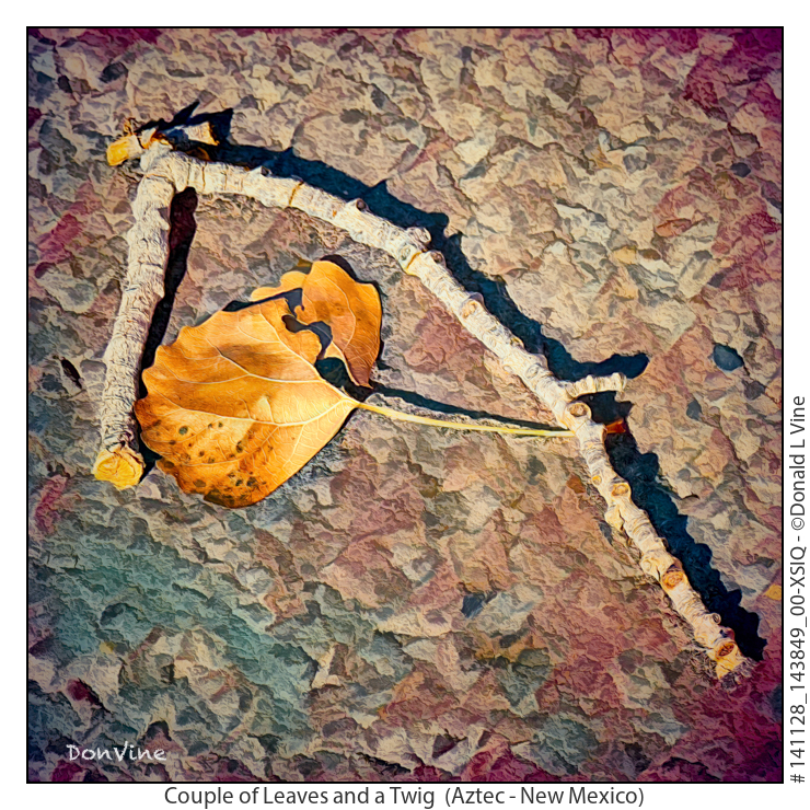 Couple%20of%20Leaves%20and%20a%20Twig_141128_143849_00-XSIQ