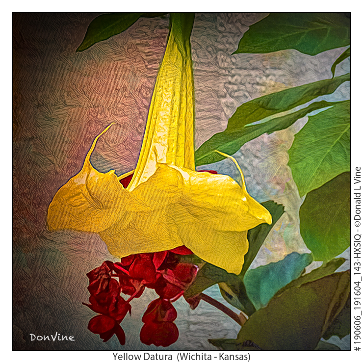 Yellow%20Datura_190606_191604_143-HXSIQ