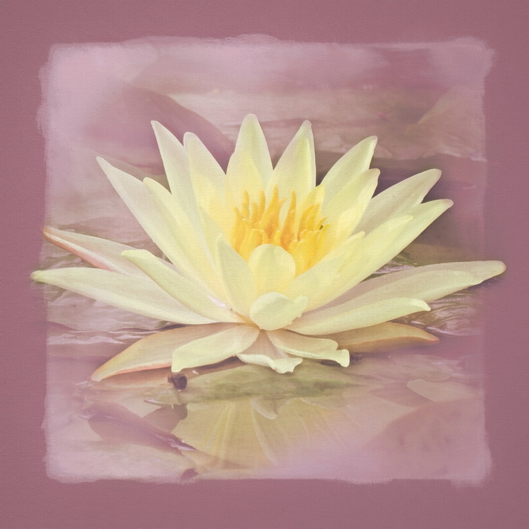 waterlily-AiR%20jjcornermasksoftCT%20Imphint_giga